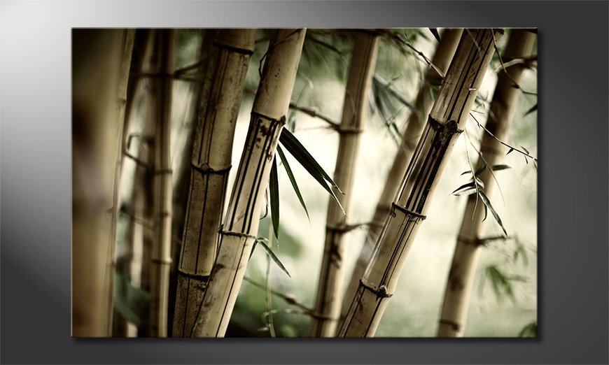 Das Leinwandbild Bamboo Forest