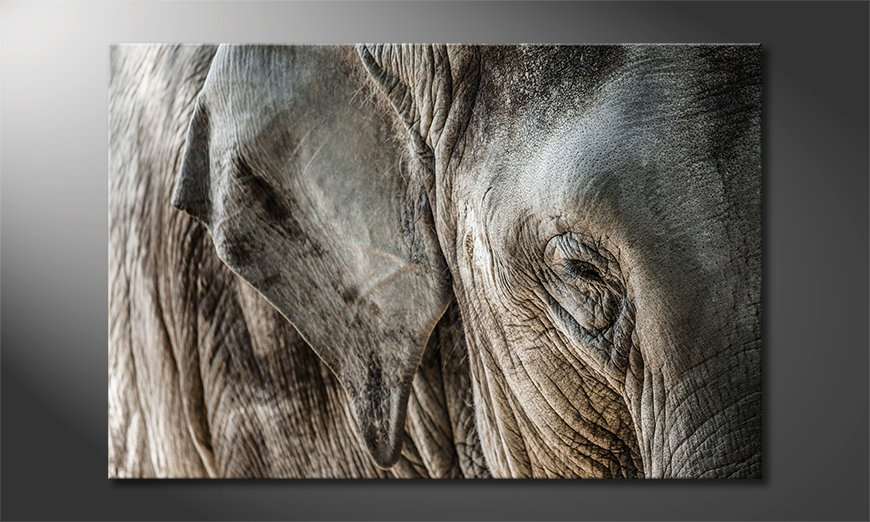 Das-Leinwandbild-Eye-of-Elephant
