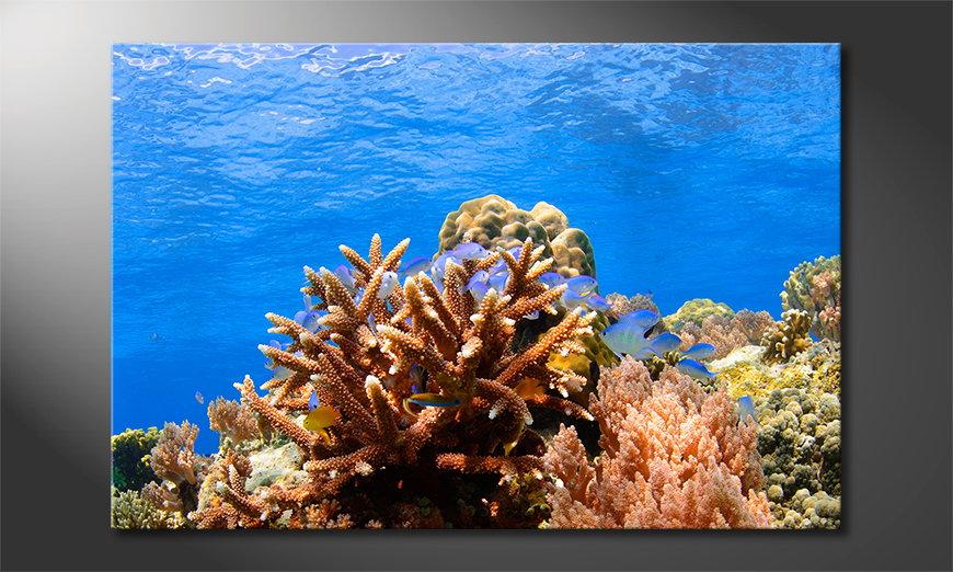 Unser modernes  Wandbild Corals Reef